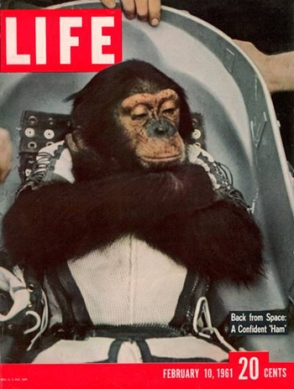 Ham adorning the cover of Life magazine
