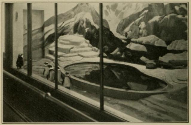 SNZ-penguin-enclosure-1937