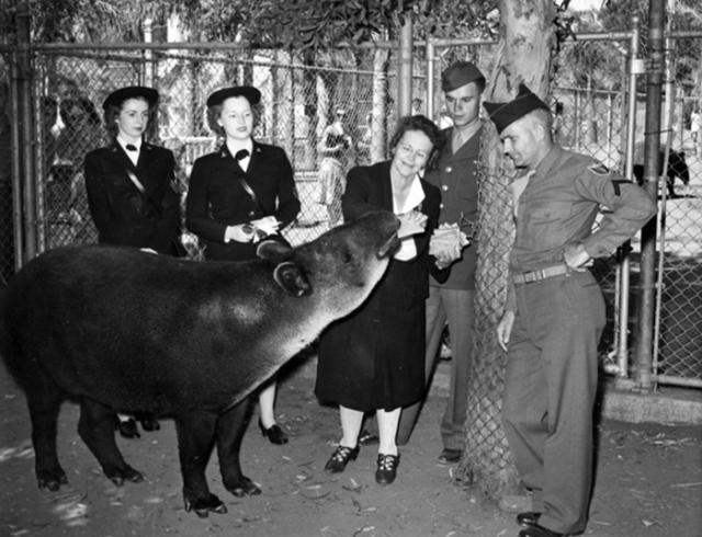 Mickey-tapir